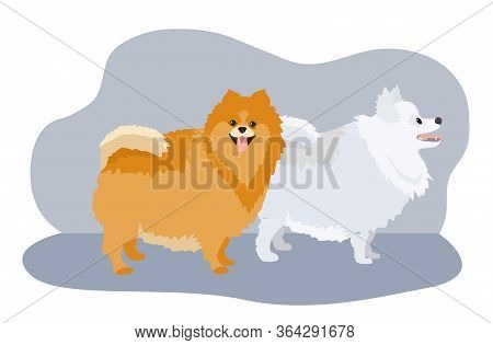 Pomeranian Spitz Set Isolated On White Background. Cute Puppies. Small German Spitz. Little Dogs. Ve