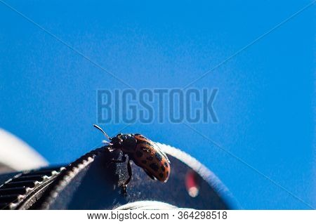 Bug With Orange Body And Black Dots In Macro.