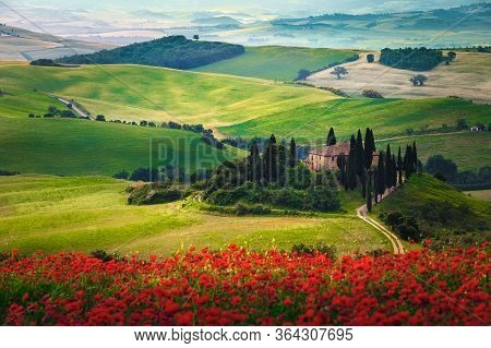 Beautiful Tuscany Countryside Landscape With Flowery Meadows. Spectacular Red Poppy Flowers In The G
