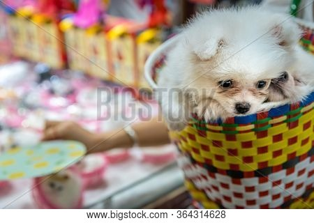 Two White Puppies Snugly Sitting In A Colorful Basket On A Shopping Trip In Ci Qi Kou Old Town In Ch