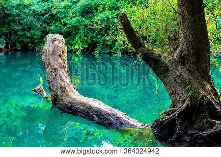 Beautiful Landscape. A Tree Lying On The Surface Of The Water In Which The Environment Is Reflected