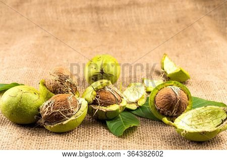 Walnut In Green Peel On Burlap Fabric Background