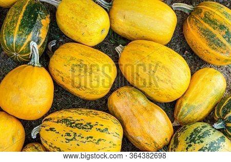 Vintage Yellow Pumpkin