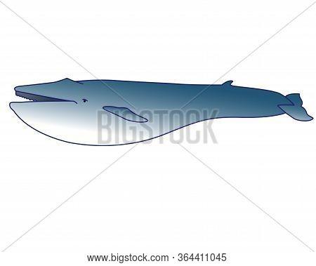 Blue Whale - Marine Mammal - Vector In Cartoon Style. Blue Whale - The Largest Mammal, Marine Illust