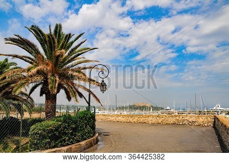 Palm Tree And Road On Embankment Near Port Of Antibes, France. Fort Carre On Background