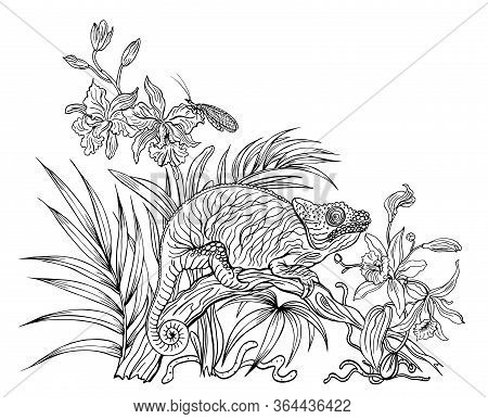 Chameleon On A Fallen Tree Trunk Among Orchids In The Jungle, Black And White Contour Graphics, Colo