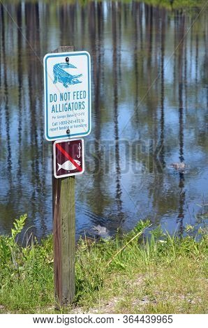 Folkston, Georgia - May 3, 2020 Two Alligators At Okefenokee Wildlife Refuge  Float Close To A Sign