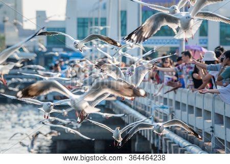 Bang Pu And Visitors Feeding Thousands Of Seagulls