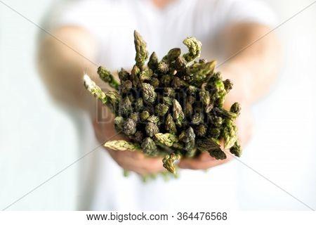 Bundle Of Green Asparagus In Hands Of Man Farmer. Mens Hands Showing Bunch Of Fresh Asparagus. Healt