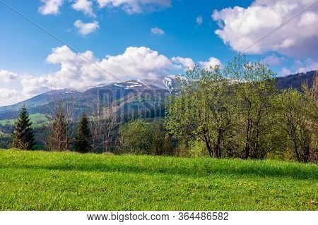 Great Outdoors On A Sunny Springtime Day. Beautiful Countryside Landscape In Mountains. Forest Behin