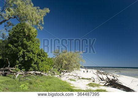 Lady Musgrave Island, Great Barrier Reef, Australia With A View Of Lush Greenery And A Sandy Beach L