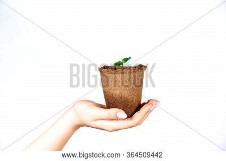 A Young Plant In A Pot Held By A Girl In Her Hand On An Isolated Background. The Seed From Which It