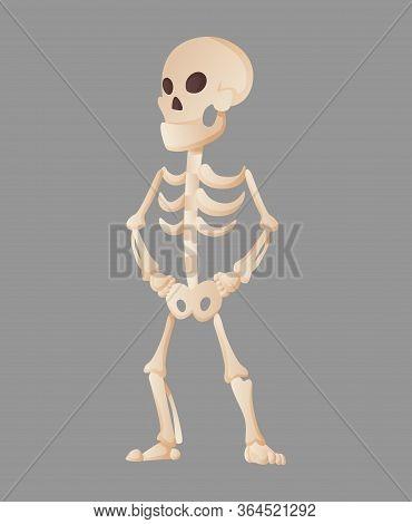 Funny Cartoon Skeleton Posing While Standing. Vector Bony Character. Human Bones Illustration Skelet