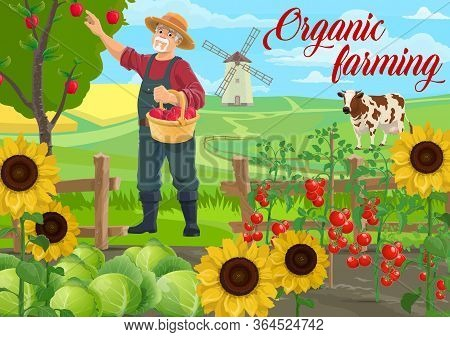 Farmer At Farm, Agriculture Garden Field, Vector Vegetables, Fruits And Cows Livestock Cattle. Farme