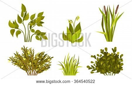Different Lush Bushes And Grass With Reed Plant Vector Set