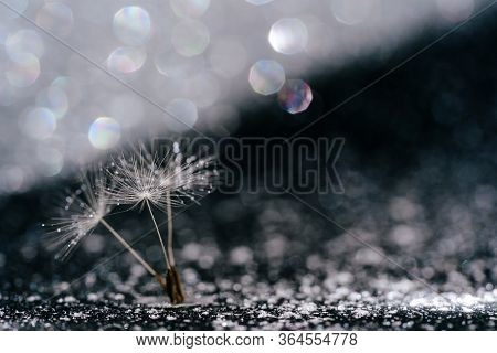 Macro Dandelion Seed Abstract Glitter Background. Fluffy Blowball Stem Sparkling Glint Around. White