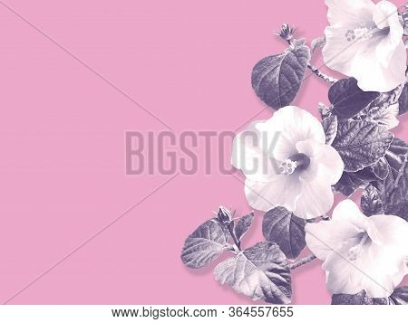 Abstract Floral Background With Copy Space For Greeting Card. Hibiscus Flowers And Leaves Vintage Mo