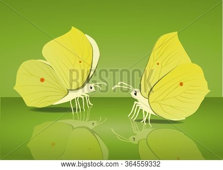 Brimstone Butterfly Moth Insect Pretty Dainty Yellow