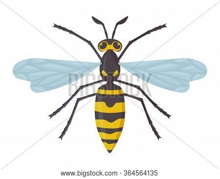 Detailed Wasp Isolated On White Background. Insect, Hornet, Dangerous Concept. Stock Vector Illustra