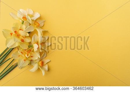 Bouquet Of Yellow Daffodils On A Yellow Background. Conceptual Background With Daffodils With Copy S