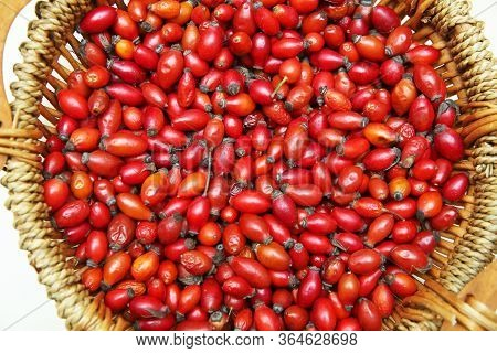 Freshly Picked Rose Hips In A Basket . Red Rose Hips In Basket . Fresh Harvested Rose Hips In The Ba