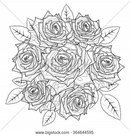 Coloring Page Rose Flowers For Adults. Stroke Without Fill. Vector Romantic Floral Illustration. Wed