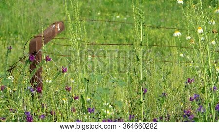 Spring Meadow With Rusty Fence Post
