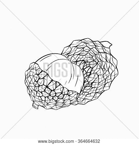 Sketch Lychee Tropical Fruit Illustration On A White Background. Whole And Half Berries. Exotic Deli