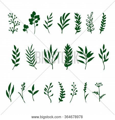 Set Of Black Branches And Herbs Vector Image
