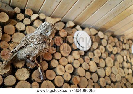 Stuffed Owl On Woodpile
