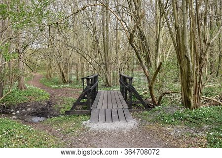 Footbridge By Leafing Season In A Bright Forest With The Ground Covered With Wood Anemones