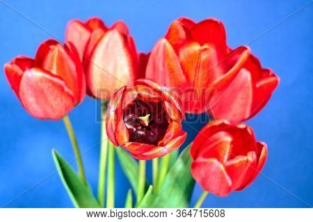 Pistil And Stamens Of A Beautiful Red-yellow Tulip Flower