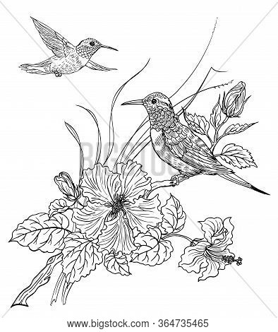 Two Hummingbird Birds And Blooming Hibiscus, Contour Black And White Drawing, Coloring Book For Adul