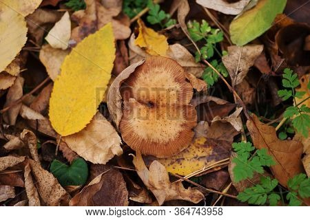 Beautiful Autumn Foliage Background. Autumn Leaves Background