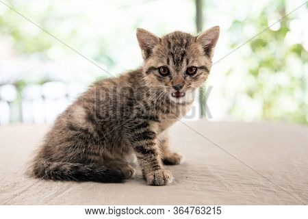 Potrait Adorable Stray Cat With Tiger