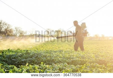 A Farmer Sprays A Solution Of Copper Sulfate On Plants Of Potato Bushes. Fight Against Fungal Infect