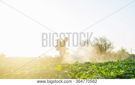 Farmer Spraying Plants With Pesticides In The Early Morning. Protecting Against Insect And Fungal In