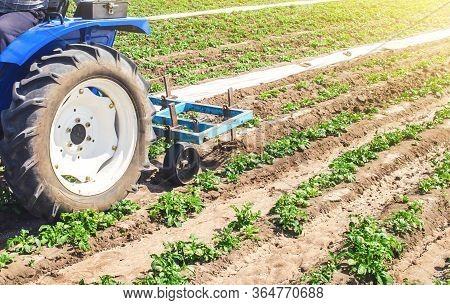 Tractor Plows Loosens The Land Of A Plantation Of A Young Riviera Variety Potato. Weed Removal And I