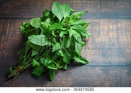 Basil Leaf On Wooden Background / Fresh Green Basil Leaves For Cooking Food Vegetables And Herbs In