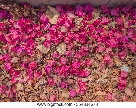 Withered Pink And Light Brown Petals Carpet Down