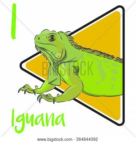 I For Iguana, Herbivorous Lizards That Are Native To Tropical Areas Of Mexico, Central America, Sout