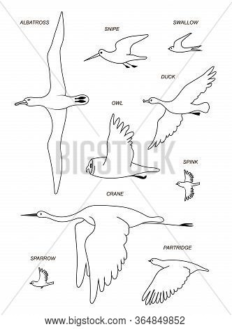Flying Birds With Text Names (crane,gull, Albatross, Duck, Sparrow, Sandpiper, Partridge, Owl, Swall
