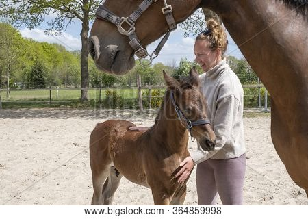 Young Colt With A Young Woman, They Hug With Pleasure, Outside In The Sun, The Mother Is There.