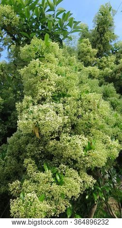 White Flowers On Shrub In Andalusian Village