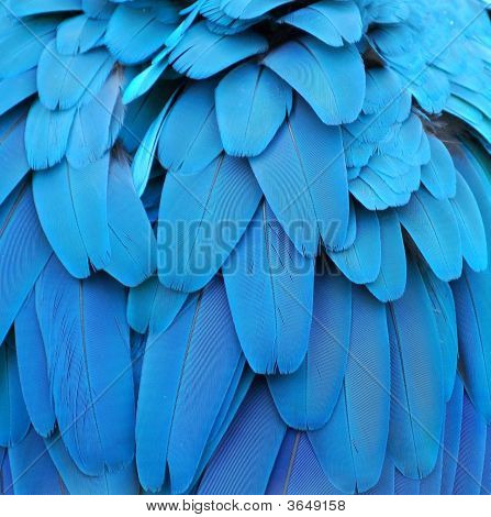 Feathers Of The Parrot