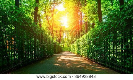 Summer sunny park landscape - summer city park with metal fences and deciduous green summer trees in sunny summer  weather. Summer landscape, summer panoramic view