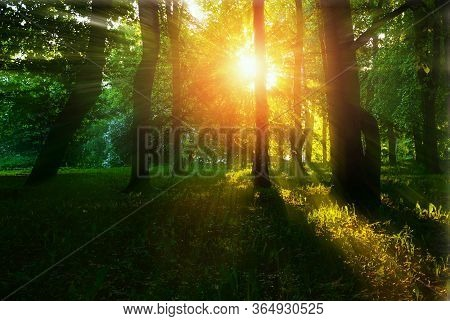 Forest summer landscape - forest summer trees with grass on the foreground and sunlight shining through the summer forest trees, colorful summer forest nature. Forest summer landscape, summer forest nature