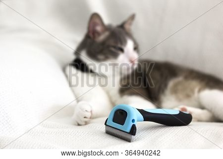 Cat Grooming. White Gray Cat Lying On The White Sofa By Brushing Comb With Fur. Removing Pets Hair.