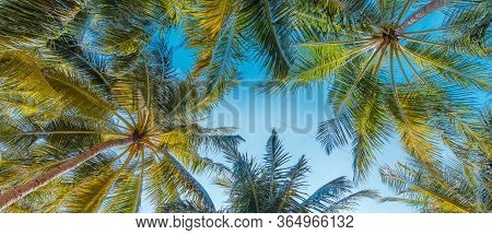 Palm Trees In Beautiful Summer Warm Sunset Mood. Summer Holiday Vibes. Happy Vocation And Travel Bac