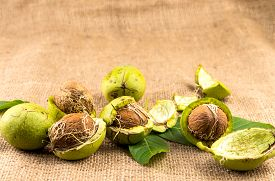 Walnut In Green Peel On Burlap Fabric Background